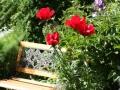 Maple Community Garden Communal Area @ Maple & 6th 035