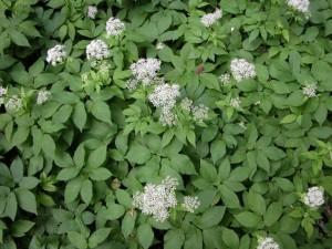 from www.weedscanada.ca