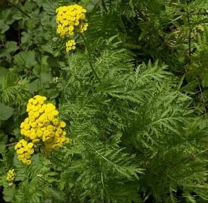 from wildflowerfinder.org.uk